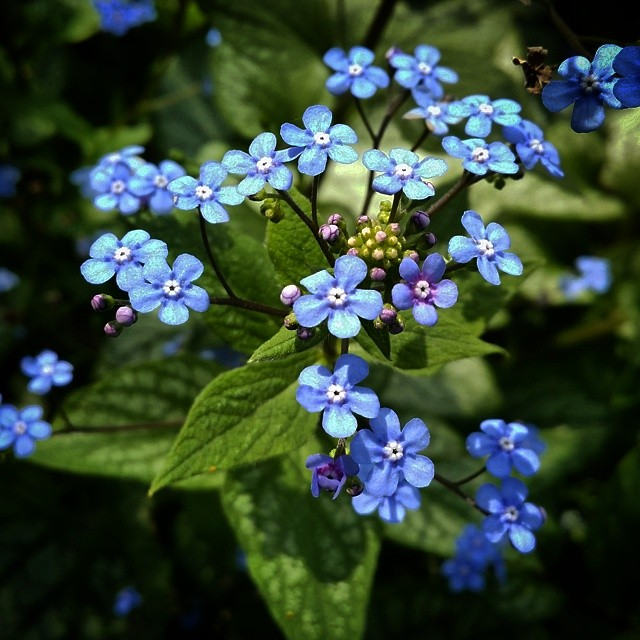 forget me not #anniversaries #grateful4 #love #yyc
