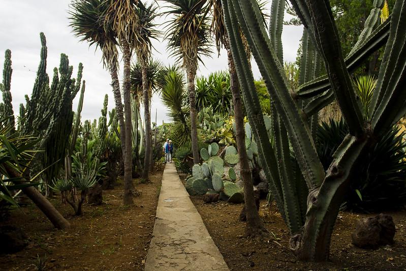 Cactus garden in Jardim botanico- Madeira
