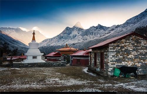 nepal animals khumjung wildanimals животные снег монастырь эверест фауна easternregion амадаблам ступа дикиеживотные якиджопы khumbuarea тенгбоче лхоцзе