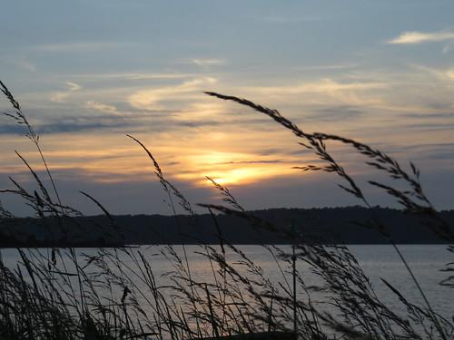 48 Sunset thro' grass