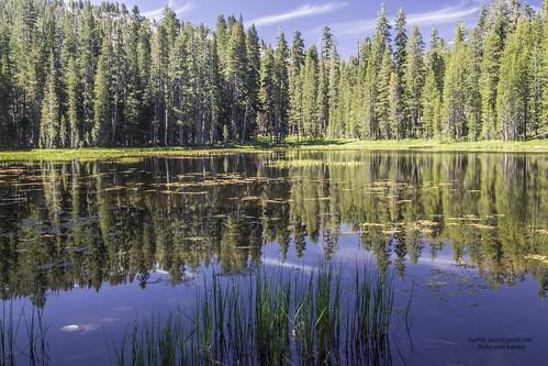 Tranquil Nature -Siesta Lake