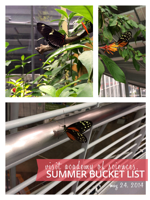 2014 Summer Bucket List: See the Butterflies at Academy of Sciences
