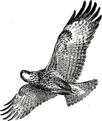 "Image from page 186 of ""Birds in flight"" (1922)"