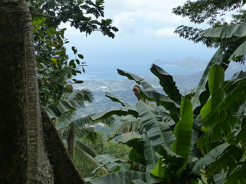 timor easttimor timorleste timore
