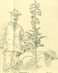 """Image from page 16 of """"The Gardeners' chronicle : a weekly illustrated journal of horticulture and allied subjects"""" (1874)"""