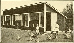 "Image from page 265 of ""Poultry production"" (1921)"
