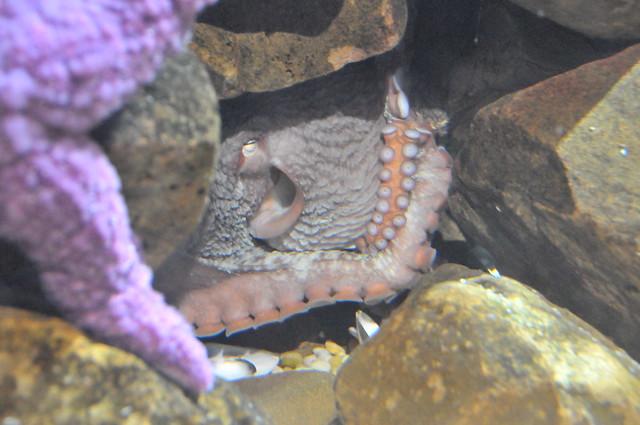 21_Georgia Aquarium