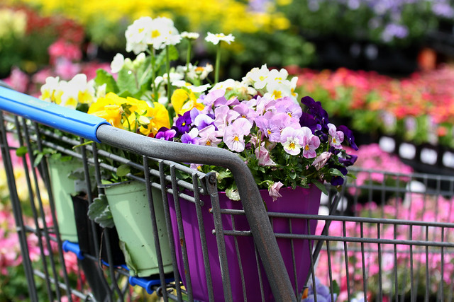 It's the little things... like a shopping cart full of flowers