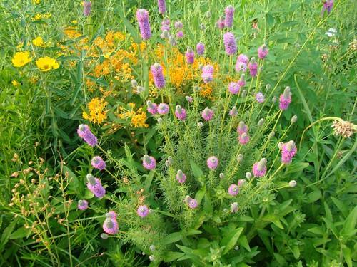 Garden Design with Michelle Zimmer