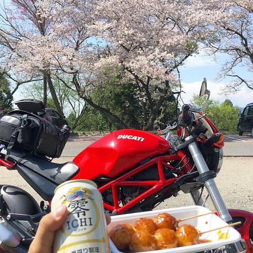 花見団子とバイク。 #ducati #ducatimonster #sakurablossom #桜 #ドゥカティ #sky #イマソラ #いまそら