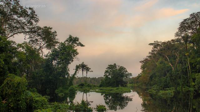 Amazonian flooded forest dawn chorus, Rio Demeni