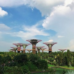 Supertree Grove #tree #sky #garden #architecture #supertree #vsco #vscocam