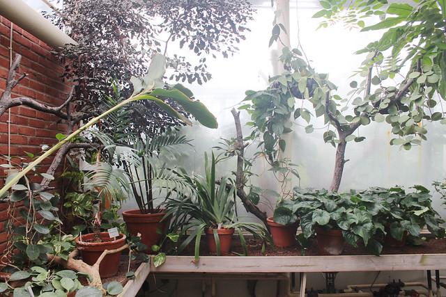 hejregina.blogspot.com palmhuset4