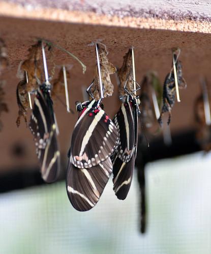 Tinker Bell Butterfly Garden