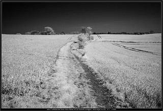 NEX-7 Infrared with Zeiss Vario-Tessar FE 24-70mm/f4 OSS@f/4