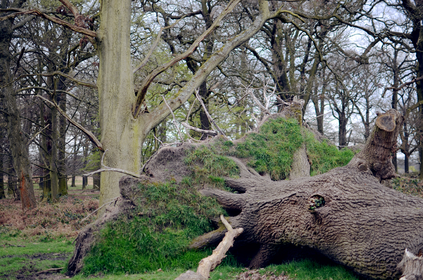 richmond tree stump