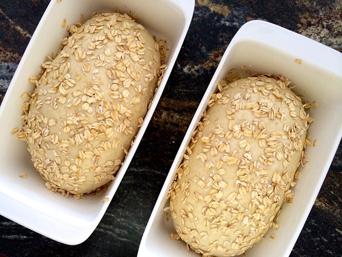 Loaves Sprinkled with Oats