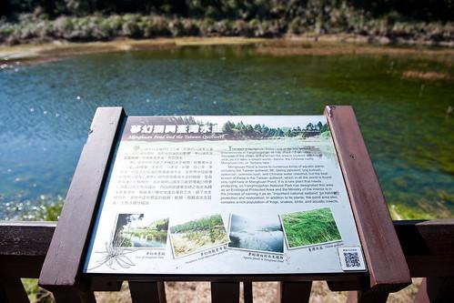 夢幻湖台灣水韭-11