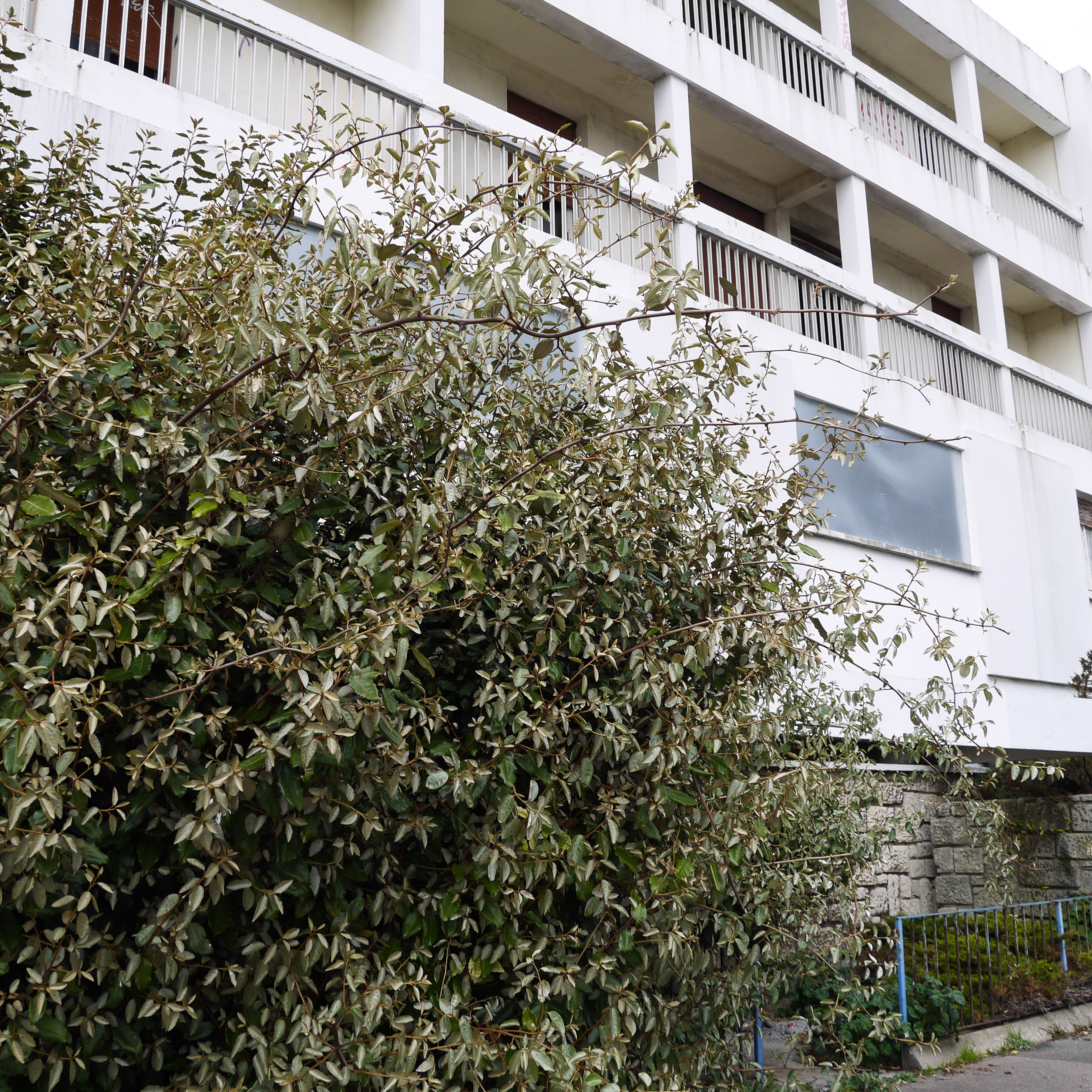 Le_Havre (32 sur 83)