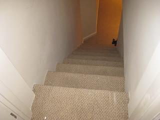 carpet_stairs