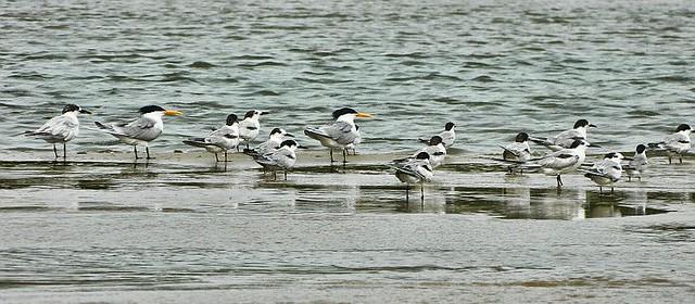 birds-alamparai-wordpress