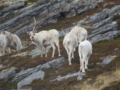 sheeps(0.0), tundra(0.0), sheep(0.0), argali(0.0), barbary sheep(0.0), goats(0.0), domestic goat(0.0), goatherd(0.0), animal(1.0), mammal(1.0), herd(1.0), grazing(1.0), fauna(1.0), mountain goat(1.0), pasture(1.0), wildlife(1.0),