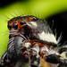 spider by Rui Pará