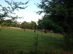 Calf Roping Farm