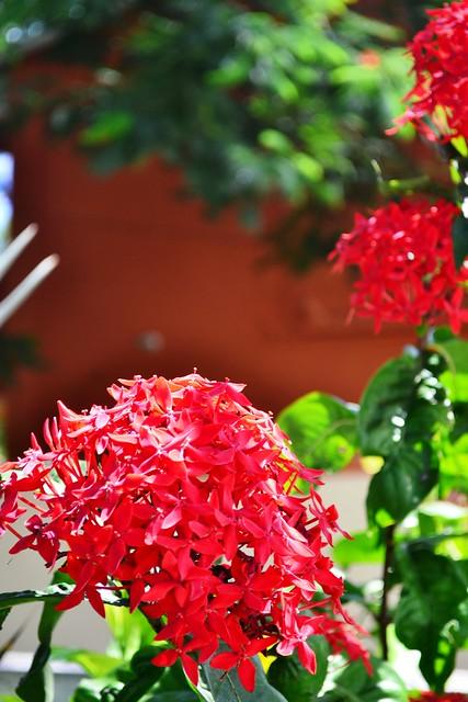 Fleurs De Maurice
