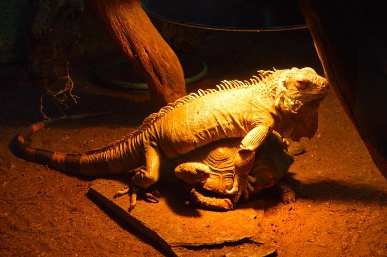 lara-vazquez-madlula-blog-safari-reptil