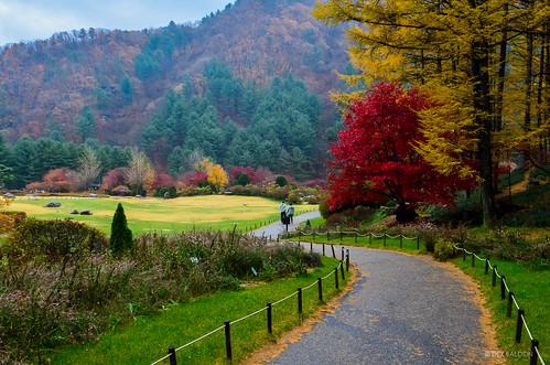 autumn fall korea southkorea gyeonggido 아침고요수목원 gardenofmorningcalm