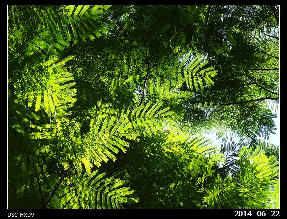 20140622_Green