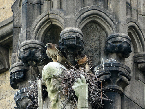 Cathedral Hawk Nest (0992)