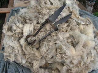 jon's fleece and hand shears