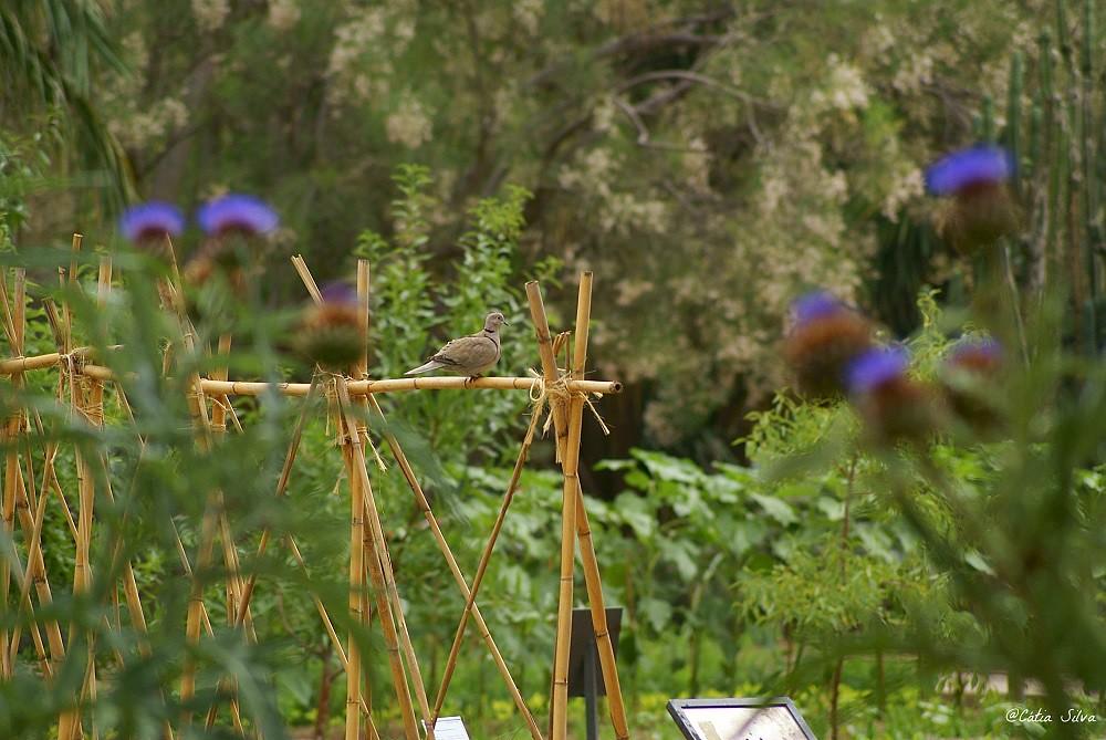 Jardin Botánico de Valencia (11)