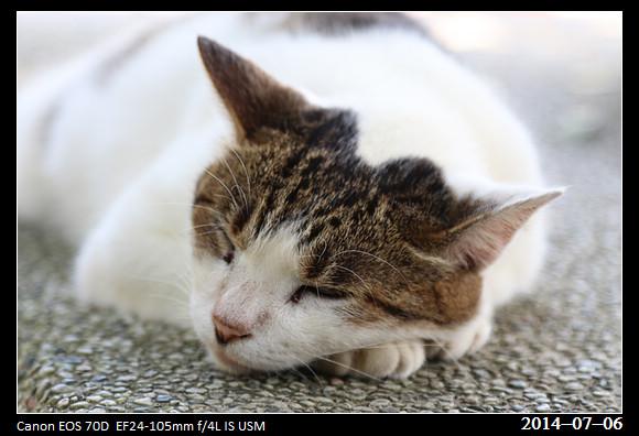 201400706_Cat_13