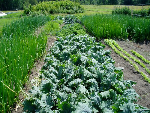 VT farm / Kale via MealMakeoverMoms.com/kitchen