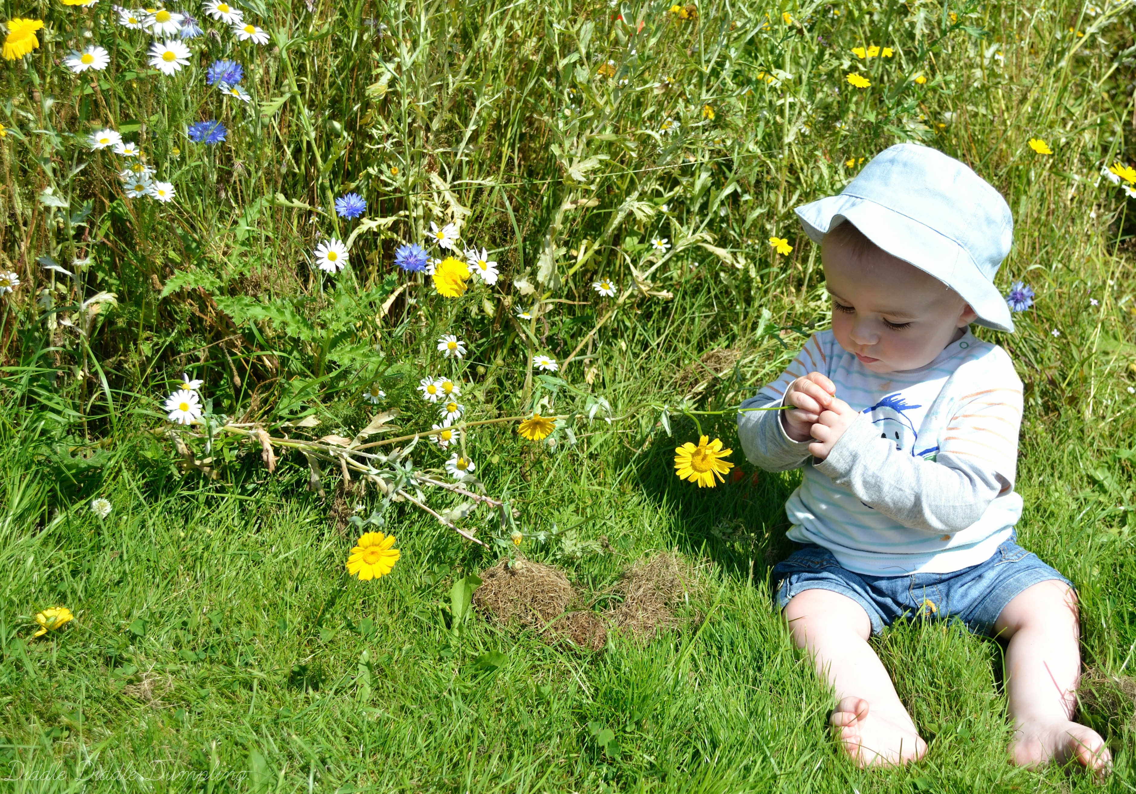 David discovering flowers at Figgate Park, Portobello.