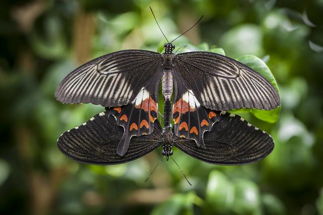 Z Gallerie Butterfly Enchanting butterfly w...