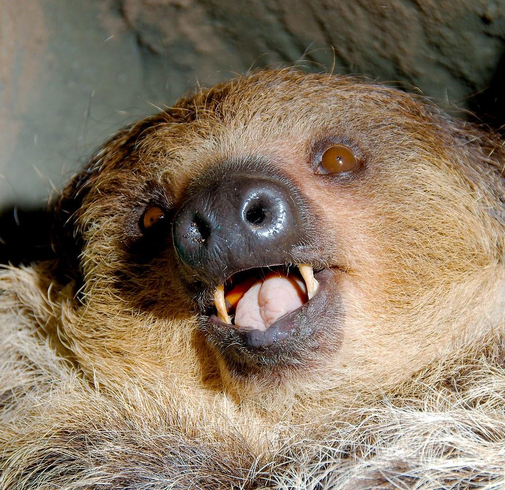 Sloth_5