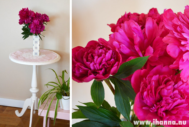 Peonies in my Home