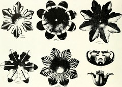 """Image from page 17 of """"Illustrating light iron pressed rosettes, cups, husks, leaves, roses and various ornaments used on lamps and lighting fixtures ..."""" (1922)"""