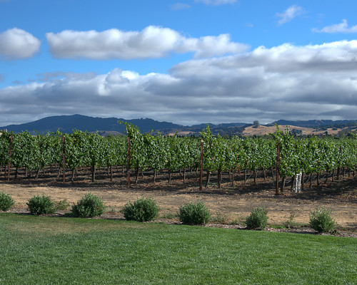 Enriquez Vineyards