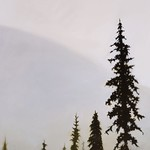 Kelly Schurger; Ghostly Pines; Oil on canvas; 48x18; 2014 -