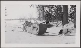 Man standing behind a loaded sled with a harnessed dog... / Homme debout derrière un traîneau chargé avec un chien...