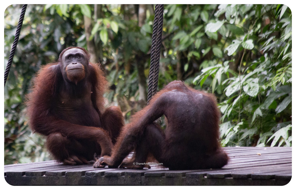 Borneo-20170413-_MG_7992