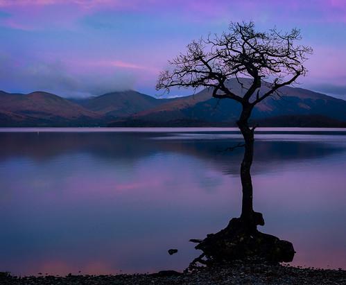 milarrochytree milarrochybay milarrochy lochlomond loch tree sunrise scotland nikon d5200 sigma35mmf14