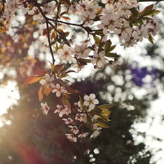 Flowering season #RX100M2 #Snapseed #flower #꽃