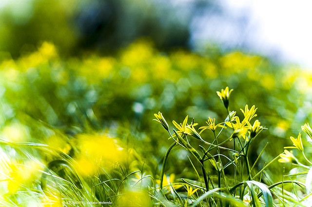 Spring | bokeh by Oreston 1.8