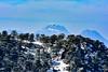 Le sommet de l'Ouarsenis, le pic de Sidi Amar, vu depuis Ras El-Braret